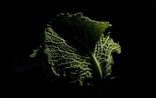 La natura sussurrata, negli scatti di Enzo Sbarra. L'intervista